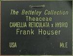 Camellia 'Frank Houser'