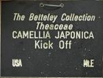 Camellia japonica 'Kick Off'