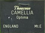 Camellia japonica 'Optima'