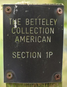 section-1p