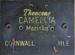 Camellia japonica 'Marinka'