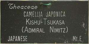 Camellia japonica 'Kishû-tsukasa'
