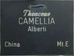 Camellia japonica 'Albertii'