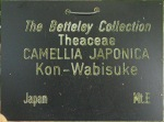 Camellia japonica 'Kon-wabisuke'