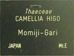 Camellia japonica 'Momijigari' (Higo)