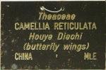 Camellia reticulata 'Houye Diechi'