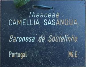 Camellia sasanqua 'Baronesa de Soutelinho'