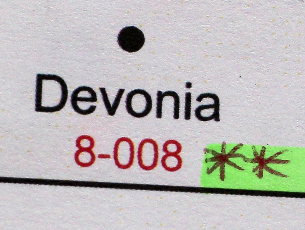 Camellia japonica 'Devonia'
