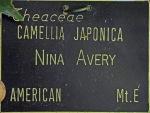 Camellia japonica 'Nina Avery'