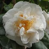 'Elizabeth Dowd'