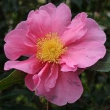 'Flower Girl'