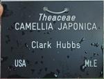 Camellia japonica 'Clark Hubbs' (GG-005)