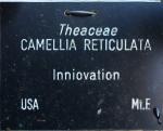Camellia 'Innovation' (GG-019)