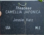 Camellia japonica 'Jessie Katz' (GG-020)