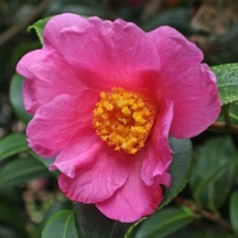 'November Pink'