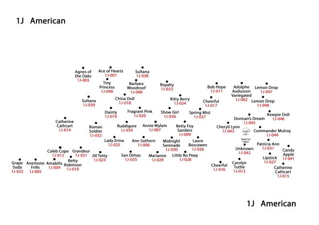 1J American