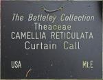 Camellia reticulata 'Curtain Call'