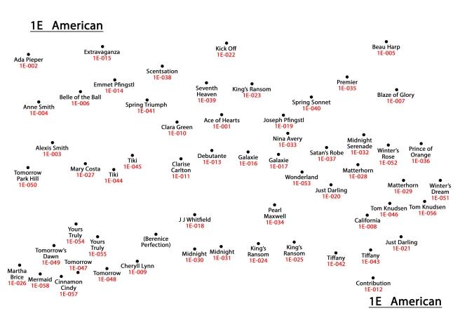 1E American