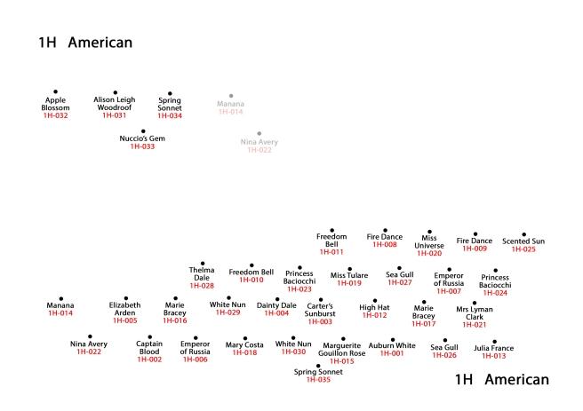 1H American