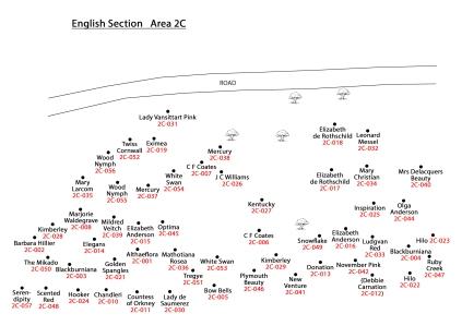 2C-English